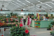 Serre olimpia da garden center serre campioni for Serre professionali usate